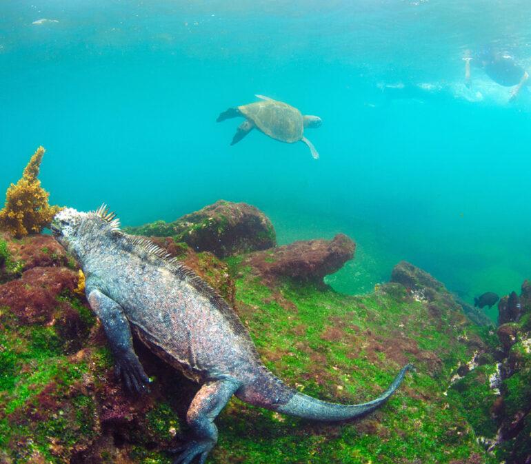 Reizen Naar Galapagos Ecuador Atacama6