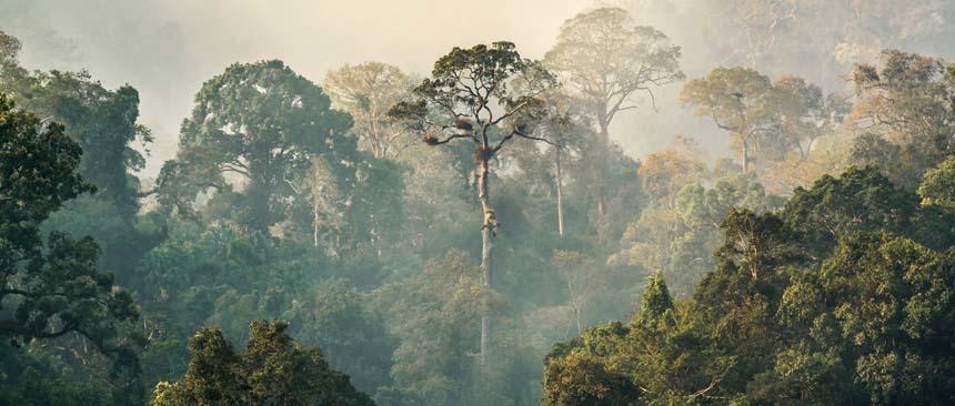 Atacama Amazone Inspiratie4